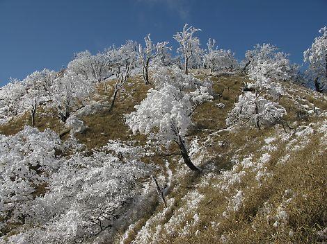 氷の花咲く蛭ヶ岳 から箒杉沢、鍋割山へ: 花のひかり